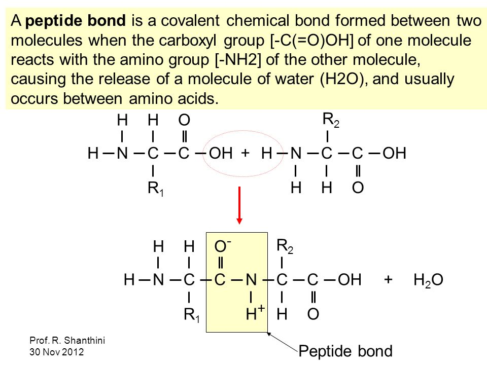 A peptide bond is a covalent chemical bond formed between two molecules when the carboxyl group [-C(=O)OH] of one molecule reacts with the amino group [-NH2] of the other molecule, causing the release of a molecule of water (H2O), and usually occurs between amino acids.